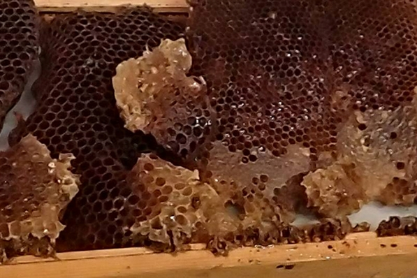 Honeycomb from Wehr Nature Center