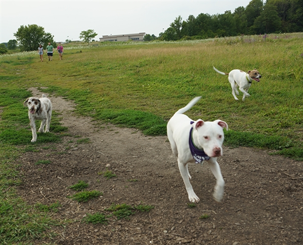 Dog Parks Dog parks are supposed to be fun — but often they're not. dog parks