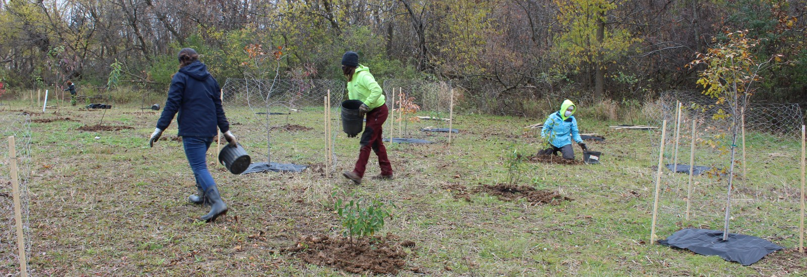 Planting Trees in Milwaukee County Parks