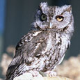 Meet Tufts the Owl at Owl Prowl