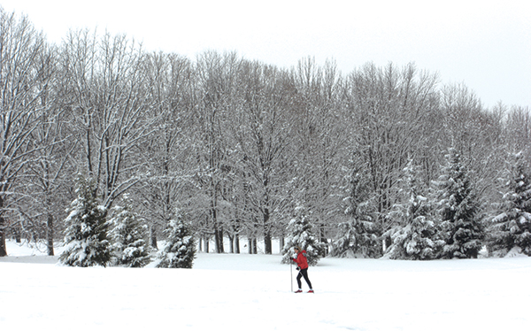 Cross Country Skiier in Whitnall Park