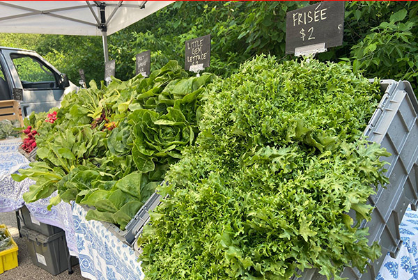 Greens at the Shorewood Farmers Market